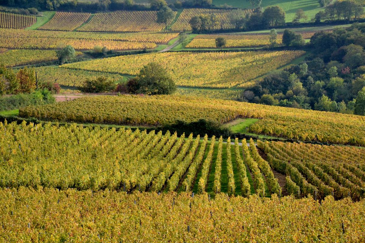 meilleur itineraire velo : les vignobles de Saône-et-Loire