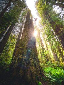 Redwood park - voyager en van