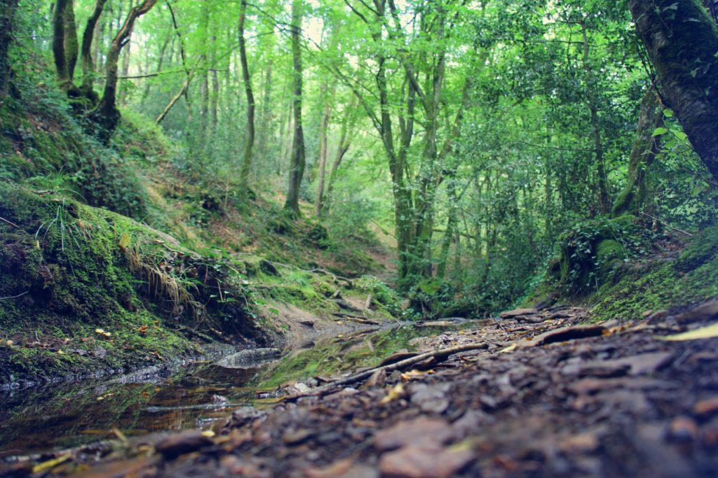Forêt de Brocéliande : legende celte