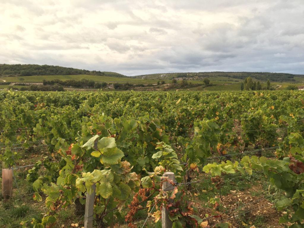 le vin c'est pas sorcier : livre sur le vin