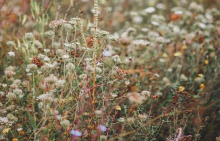 Mauvaises herbes : un premier roman de Dima Abdallah