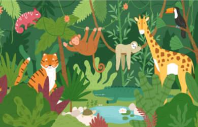 livres animaux pour enfants
